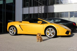 Missmorrison-Yellow-Lamborghini