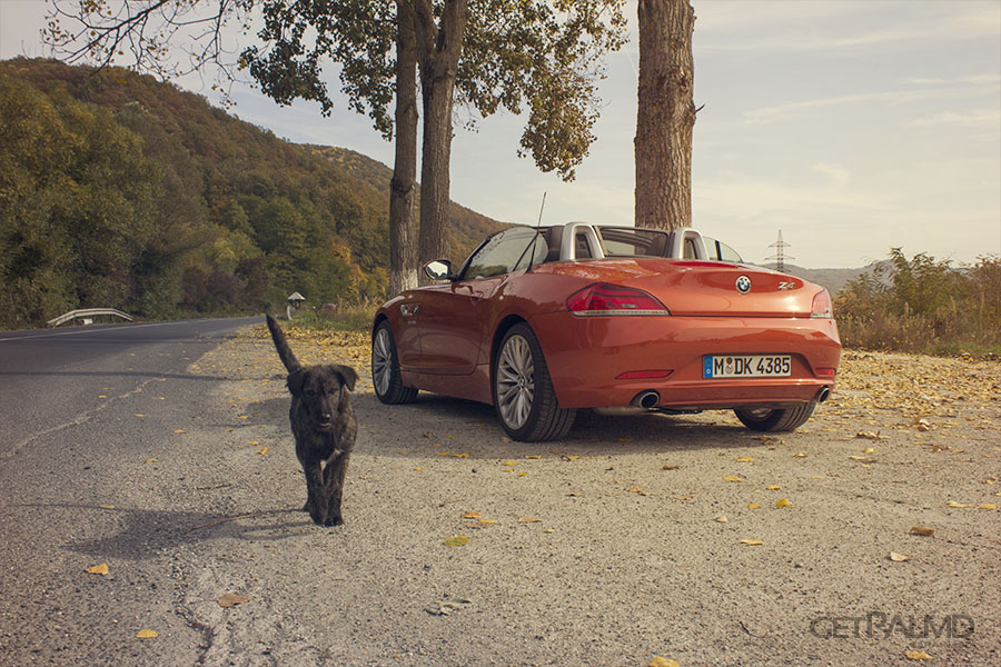 BMW Z4 Romania dog