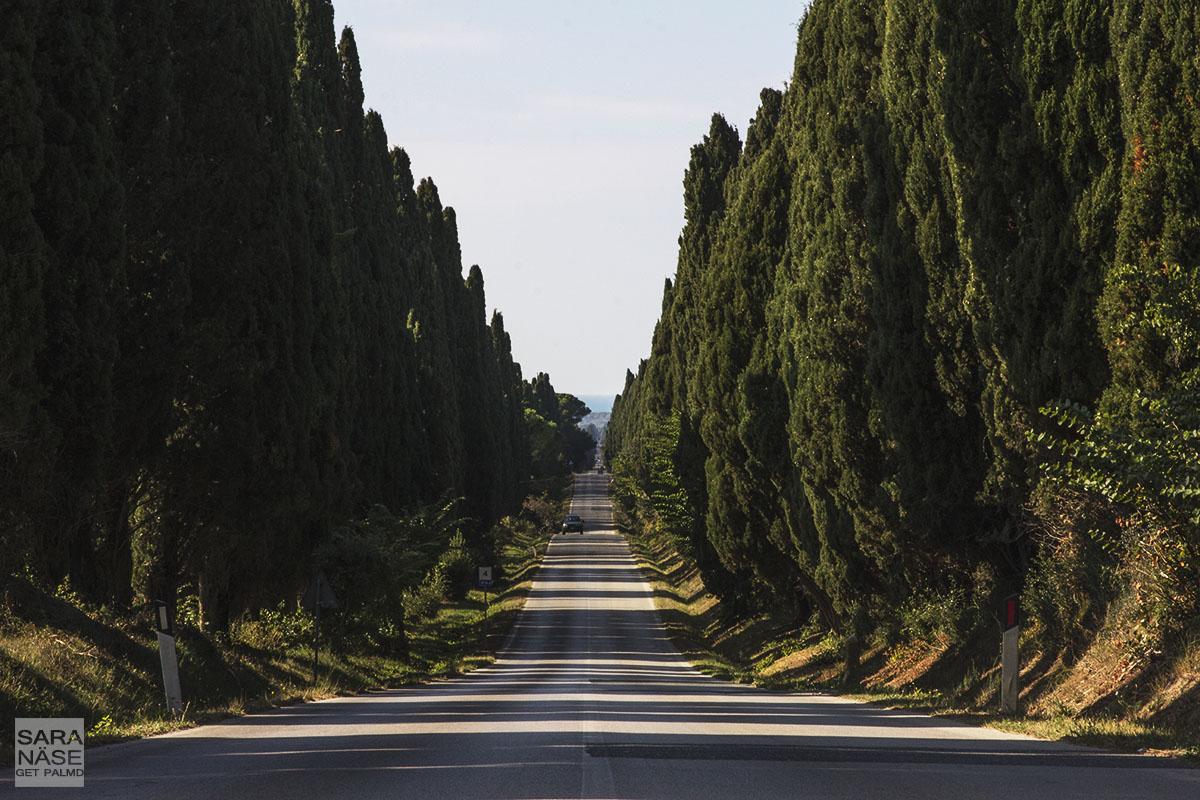 Bolgheri Avenue Tuscany