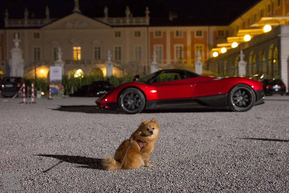 Pagani and dog