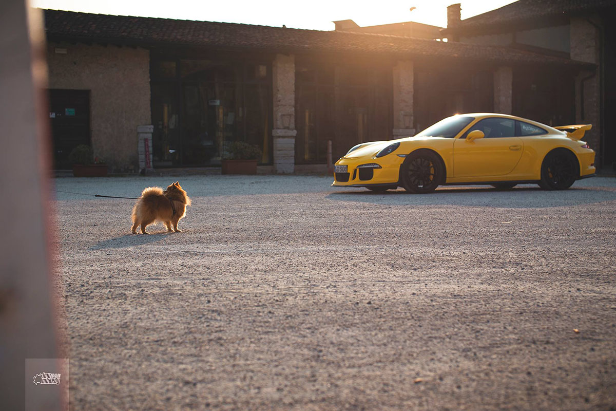 Dog and 991 GT3