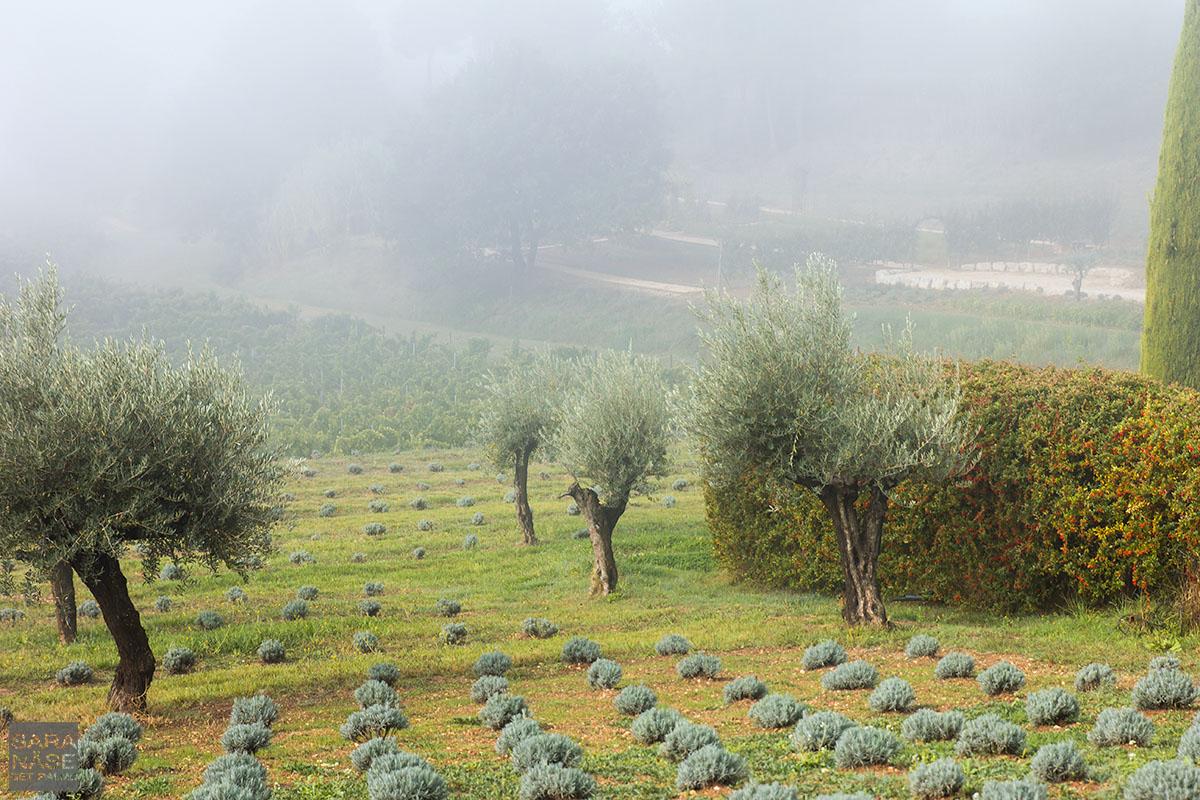 Vineyard hills Coquillade