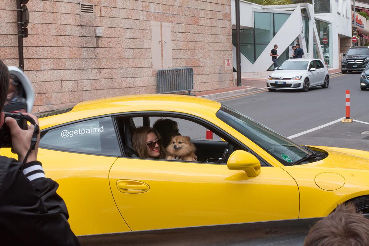 GT3 dog spotting Monaco
