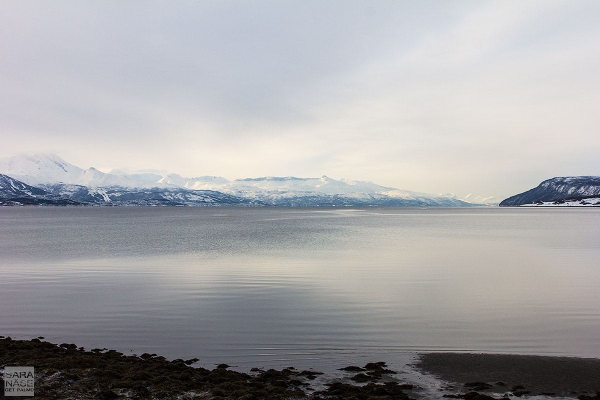 Narvik view