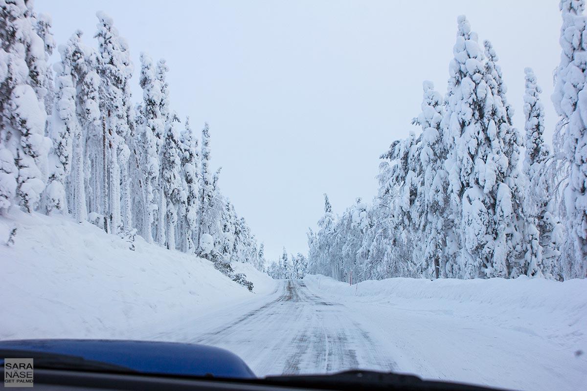 Levi-icy-road