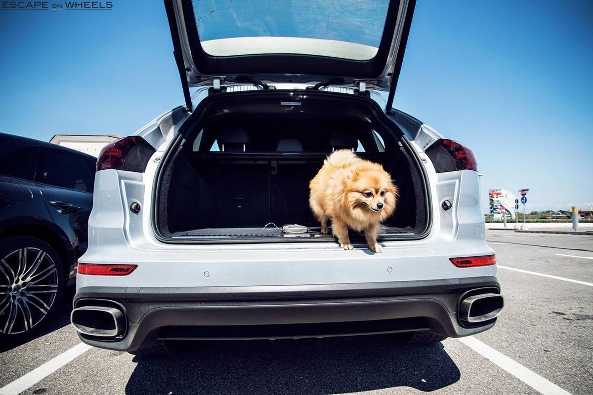 Porsche-Cayenne-dog