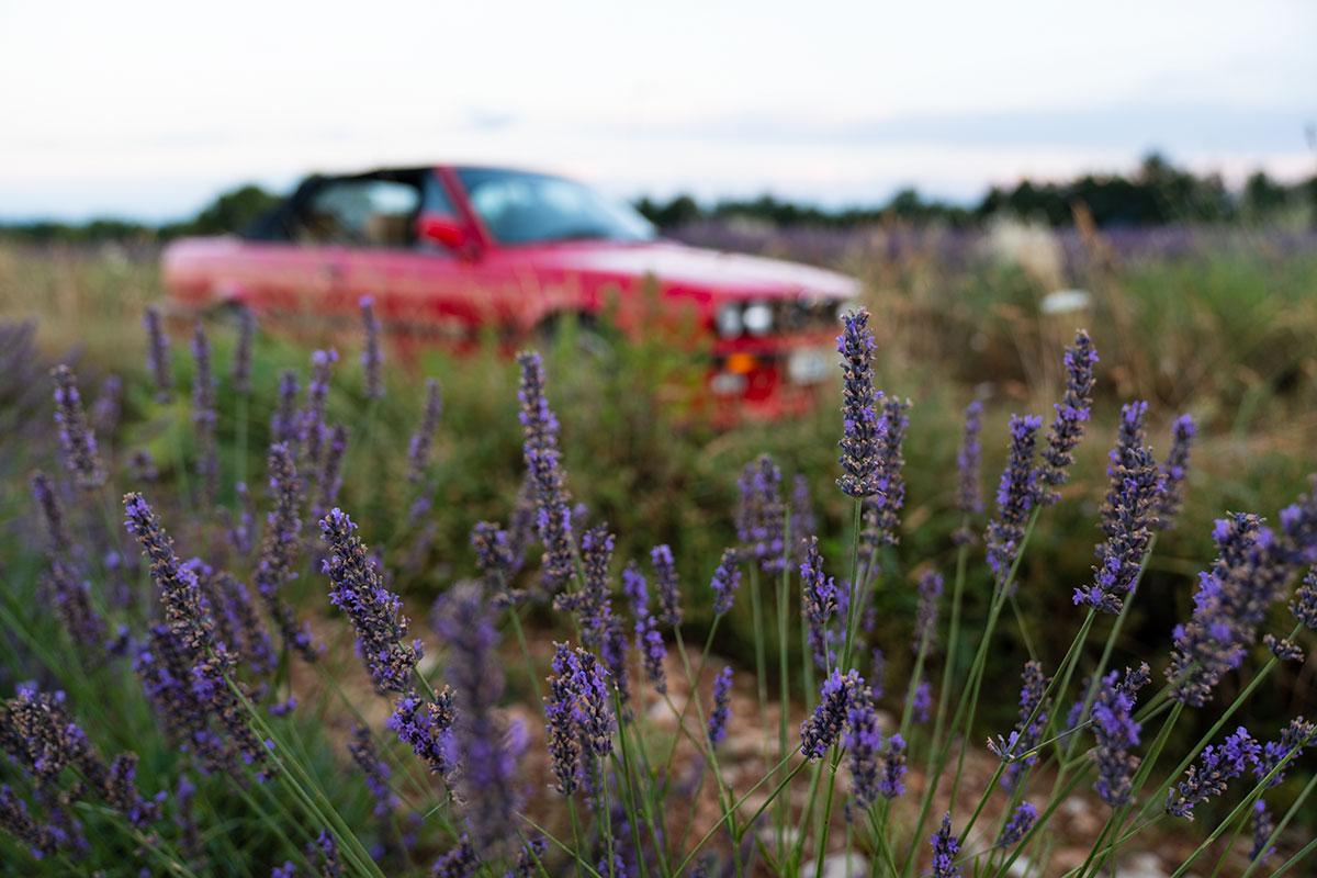 Lavender route - Valensole - Verdon - Provence