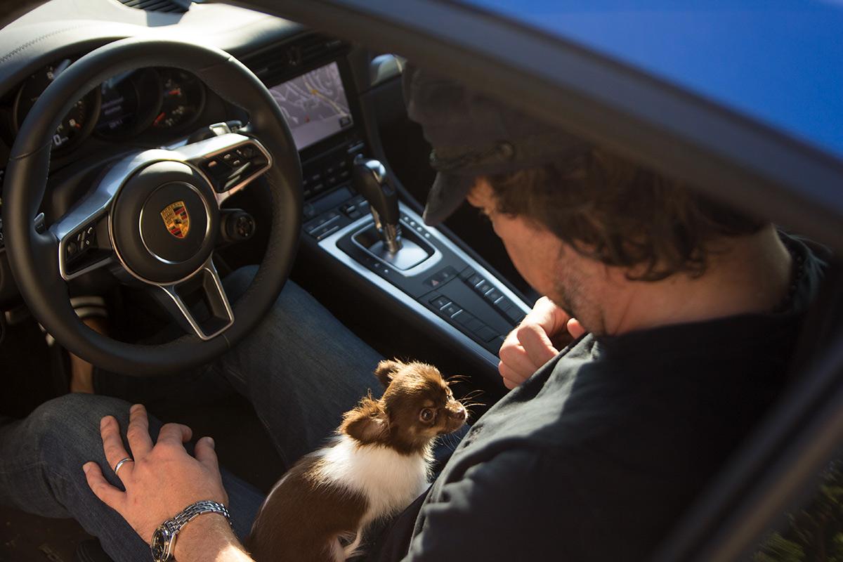 Chihuahu puppy in Porsche